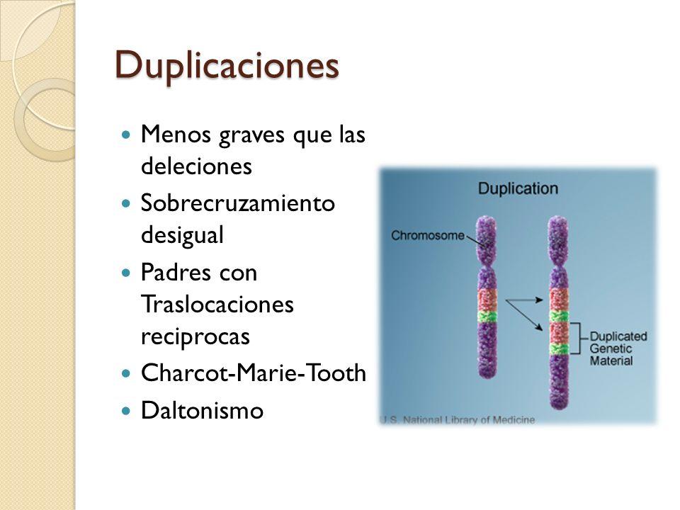 Duplicaciones Menos graves que las deleciones