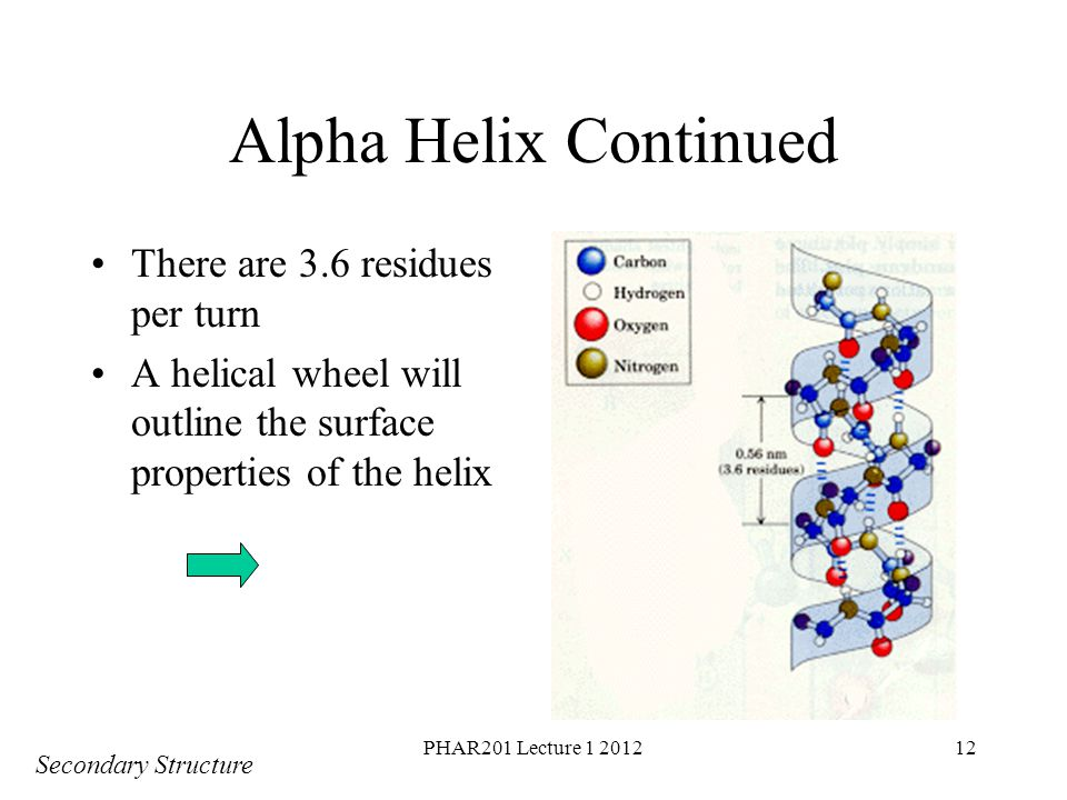 Alpha Helix Continued There are 3.6 residues per turn