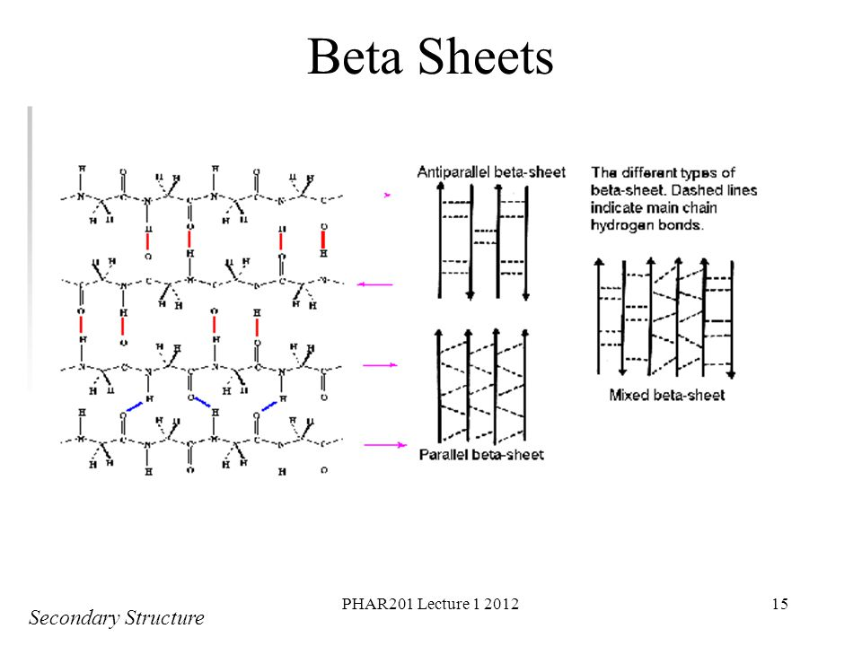Beta Sheets PHAR201 Lecture 1 2012 Secondary Structure