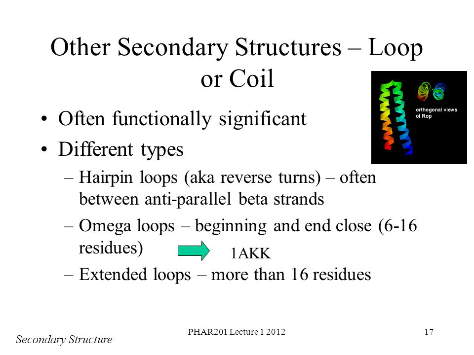 Other Secondary Structures – Loop or Coil