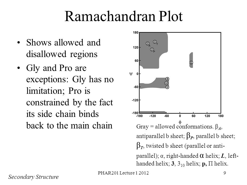Ramachandran Plot Shows allowed and disallowed regions