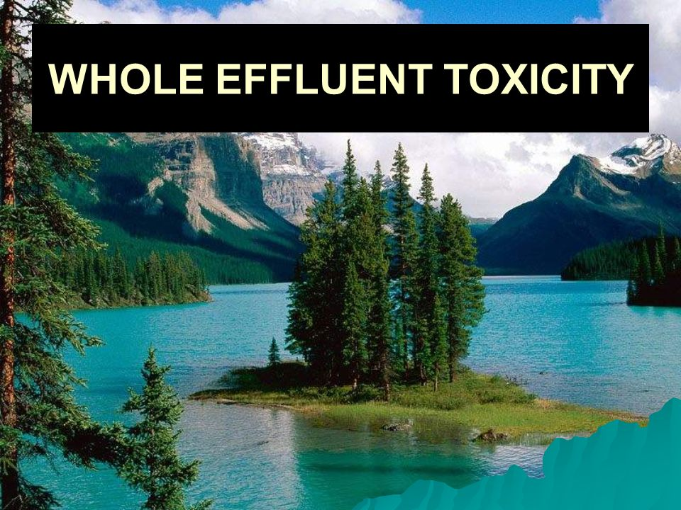 WHOLE EFFLUENT TOXICITY