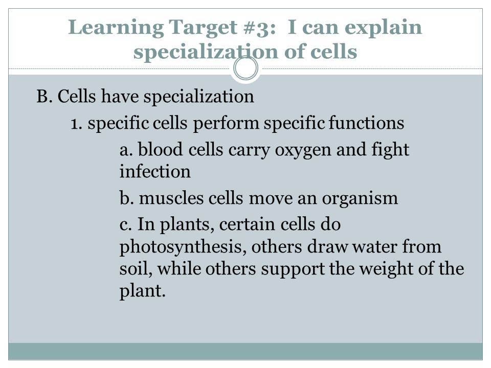 Learning Target #3: I can explain specialization of cells