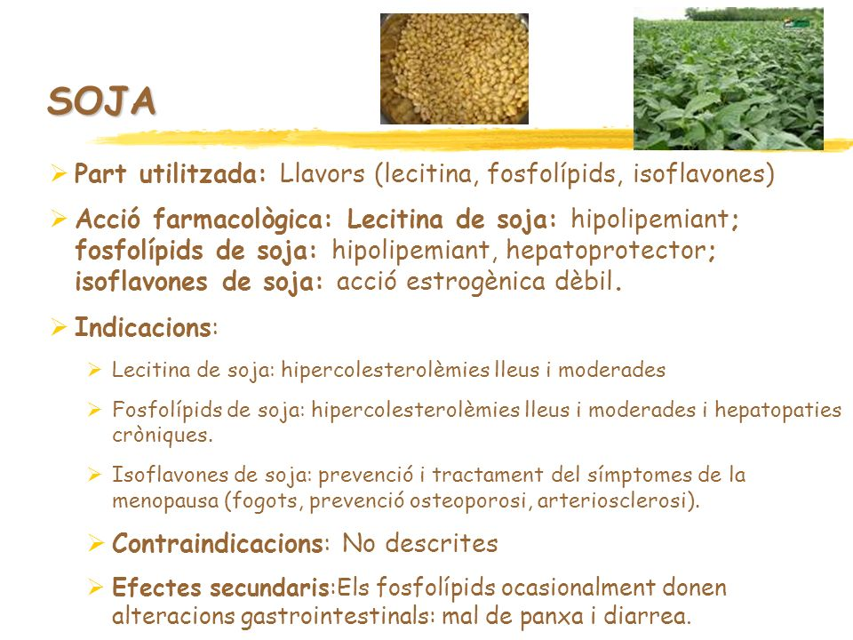 SOJA Part utilitzada: Llavors (lecitina, fosfolípids, isoflavones)
