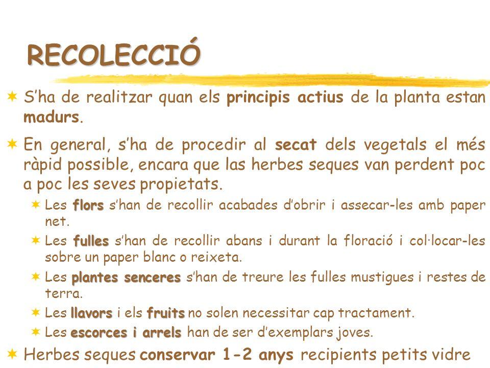 RECOLECCIÓ S'ha de realitzar quan els principis actius de la planta estan madurs.