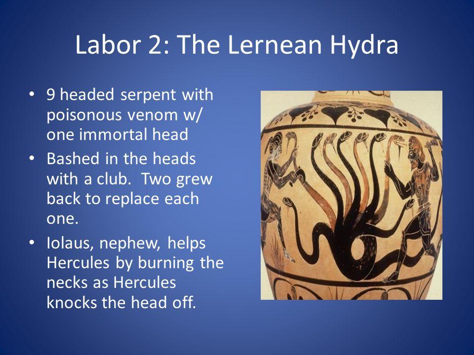 Labor 2: The Lernean Hydra