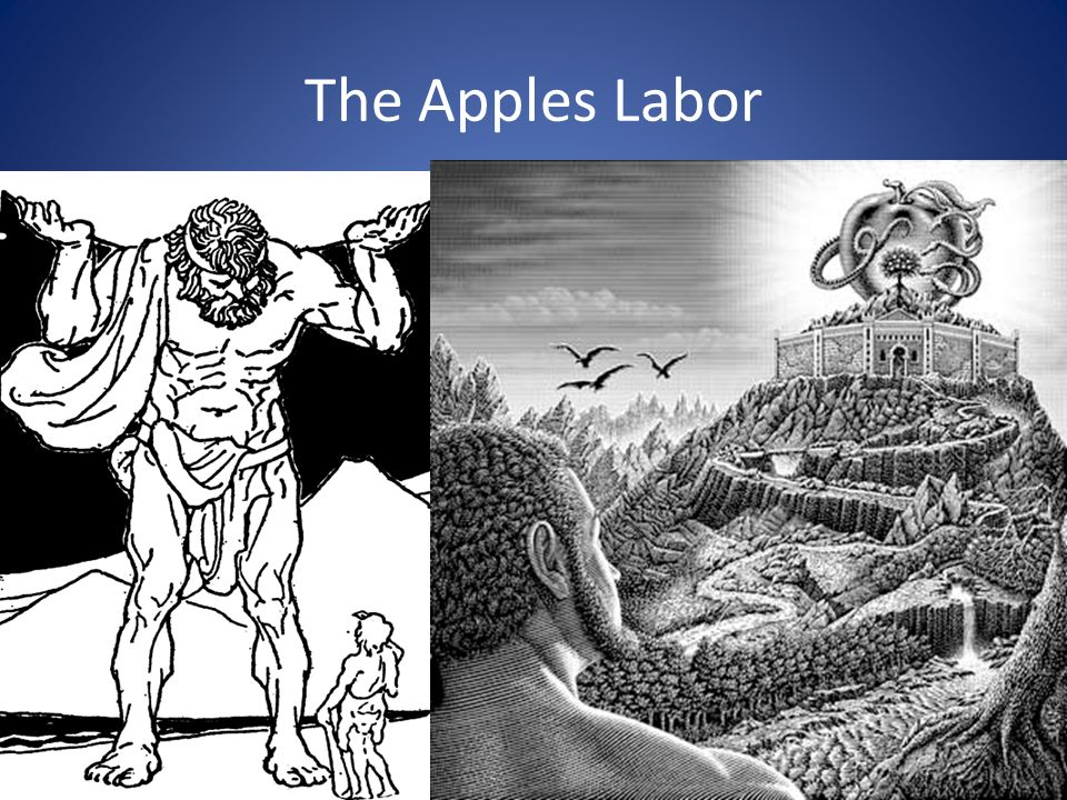The Apples Labor
