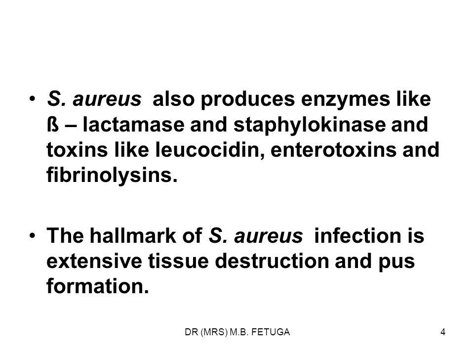 S. aureus also produces enzymes like ß – lactamase and staphylokinase and toxins like leucocidin, enterotoxins and fibrinolysins.