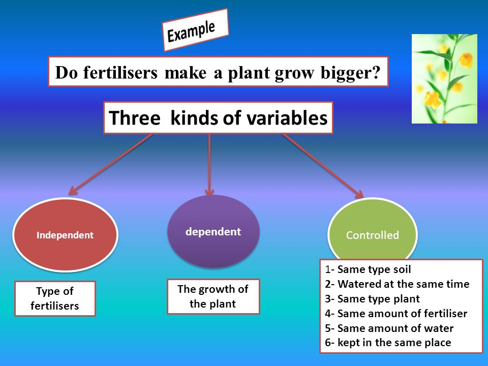Do fertilisers make a plant grow bigger