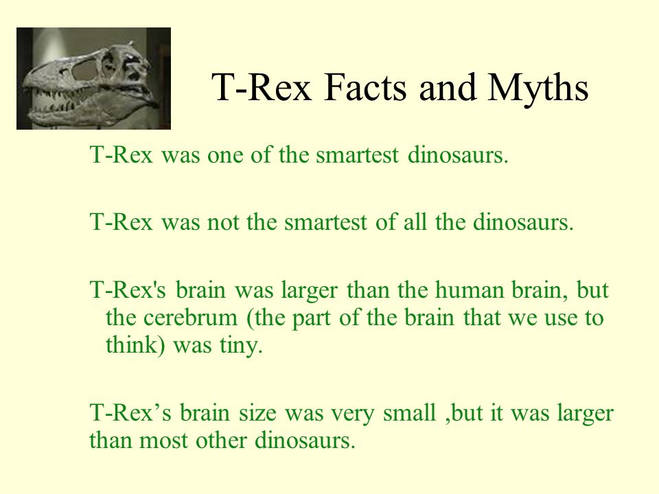 T-Rex Facts and Myths T-Rex was one of the smartest dinosaurs.