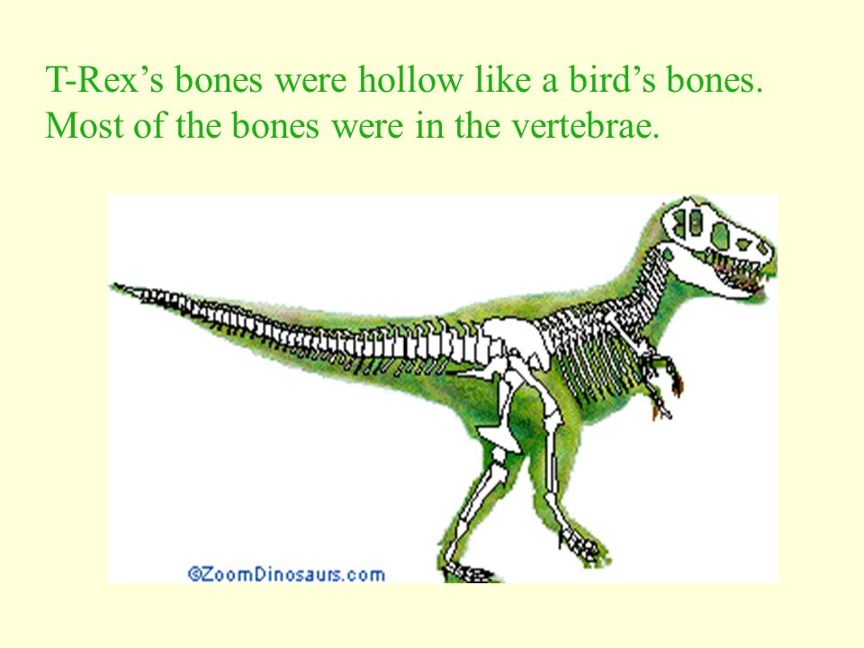 T-Rex's bones were hollow like a bird's bones