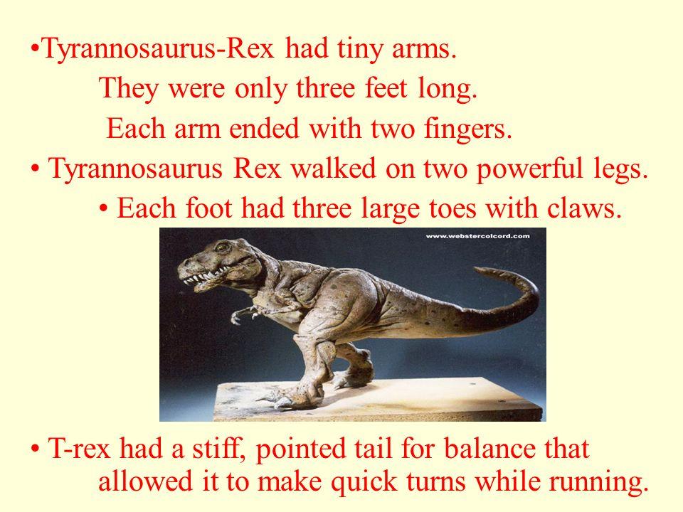 Tyrannosaurus-Rex had tiny arms.