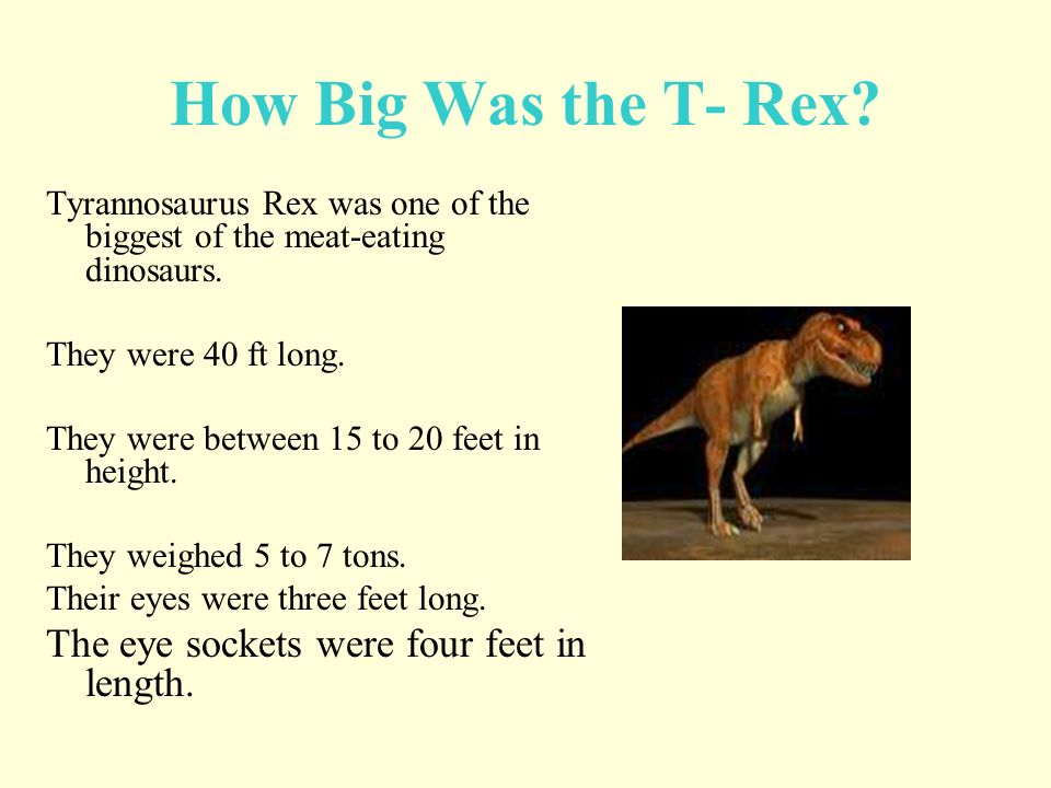 How Big Was the T- Rex The eye sockets were four feet in length.