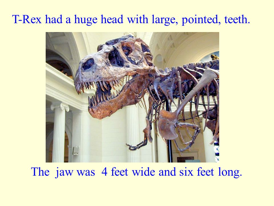 T-Rex had a huge head with large, pointed, teeth.