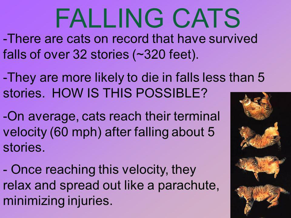 FALLING CATS-There are cats on record that have survived falls of over 32 stories (~320 feet).