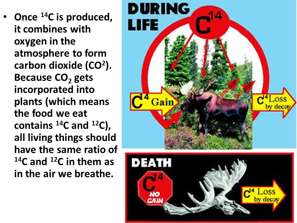 Once 14C is produced, it combines with oxygen in the atmosphere to form carbon dioxide (CO2).