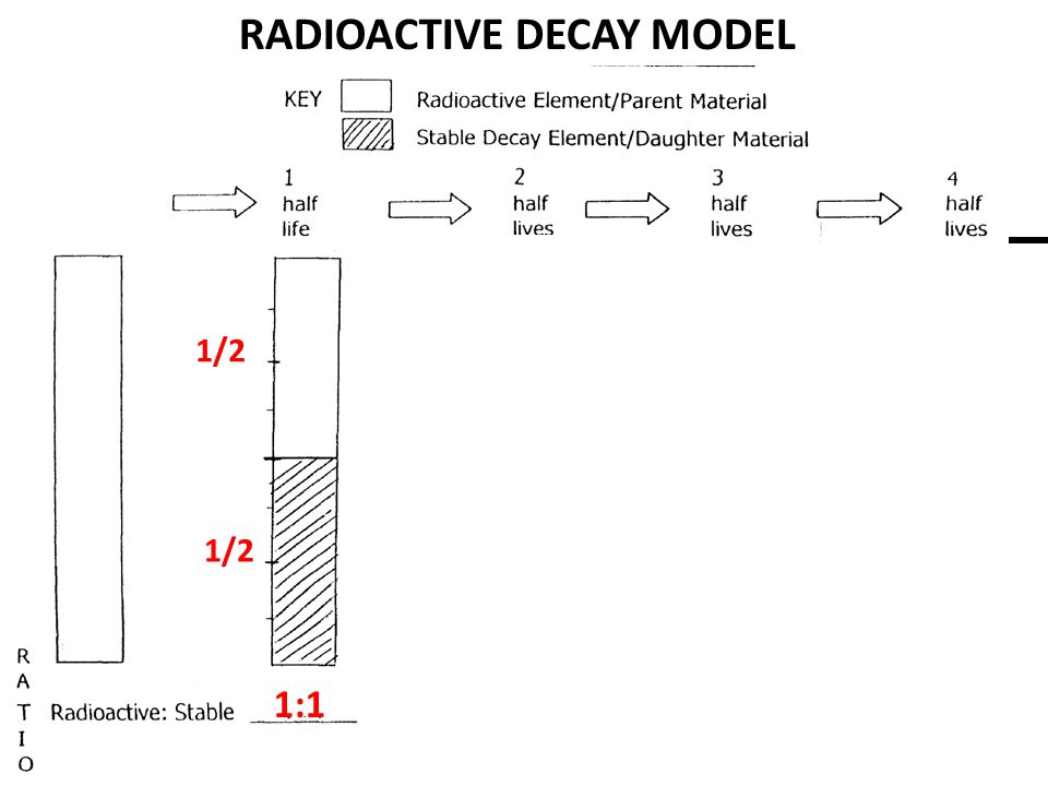 RADIOACTIVE DECAY MODEL