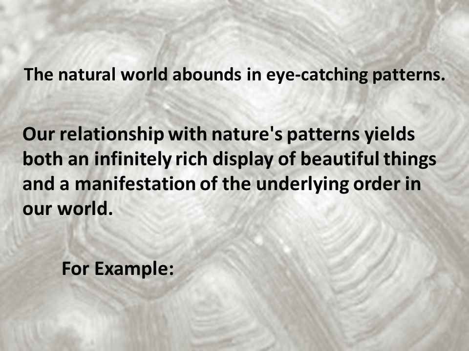 The natural world abounds in eye-catching patterns
