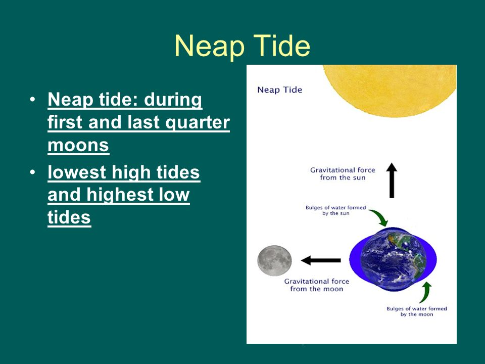 Neap Tide Neap tide: during first and last quarter moons