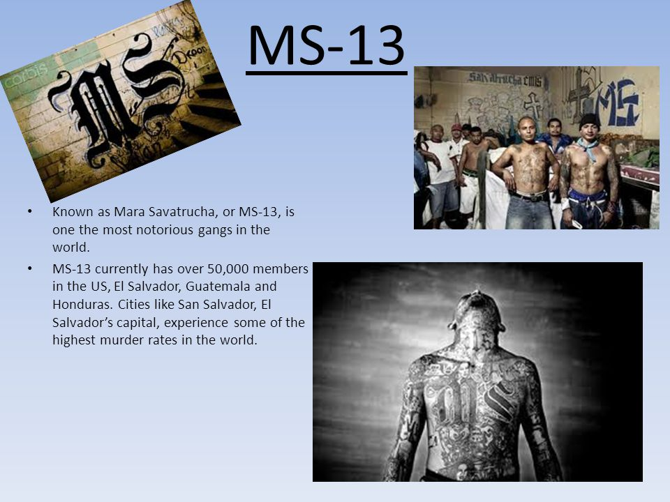 MS-13 Known as Mara Savatrucha, or MS-13, is one the most notorious gangs in the world.