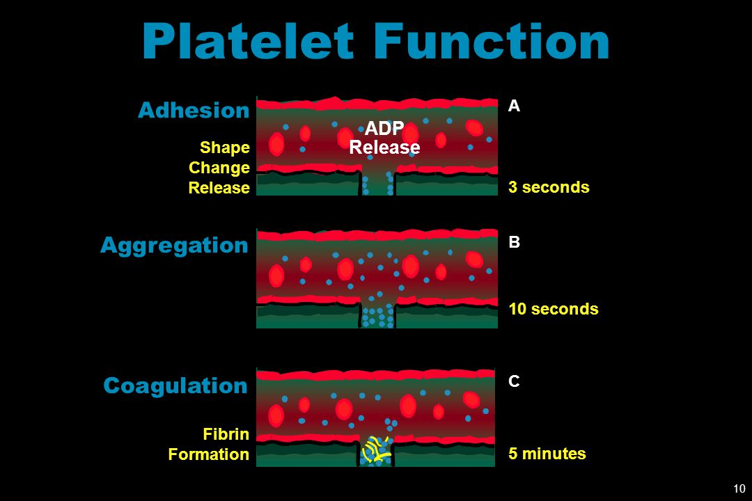 Platelet Function Adhesion Aggregation Coagulation ADP Release A