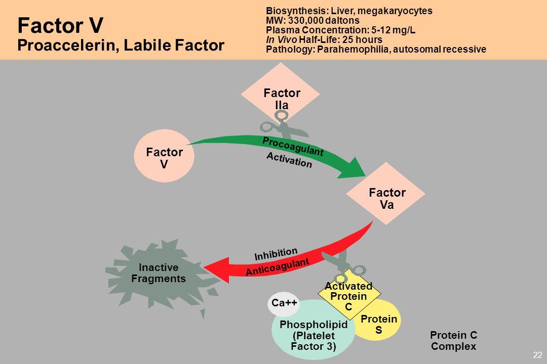 Factor V Proaccelerin, Labile Factor Factor IIa V Factor Va Activated