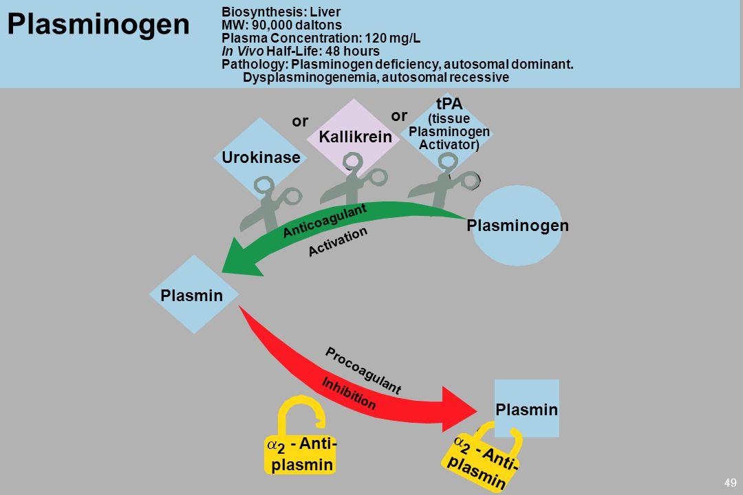 Plasminogen tPA or or Kallikrein Urokinase Plasminogen Plasmin Plasmin