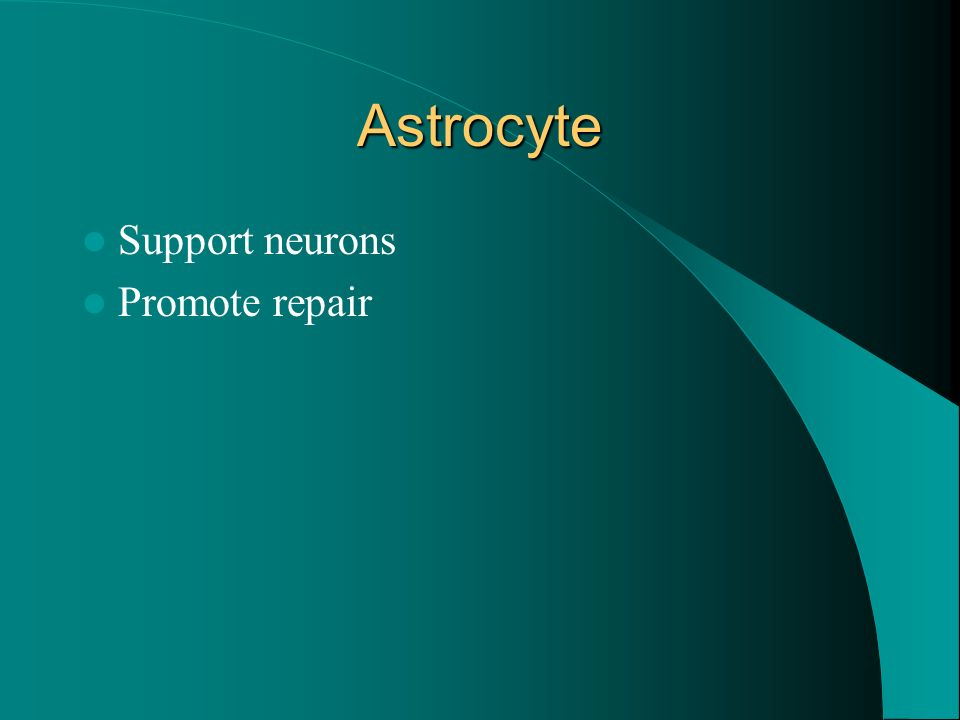 Astrocyte Support neurons Promote repair