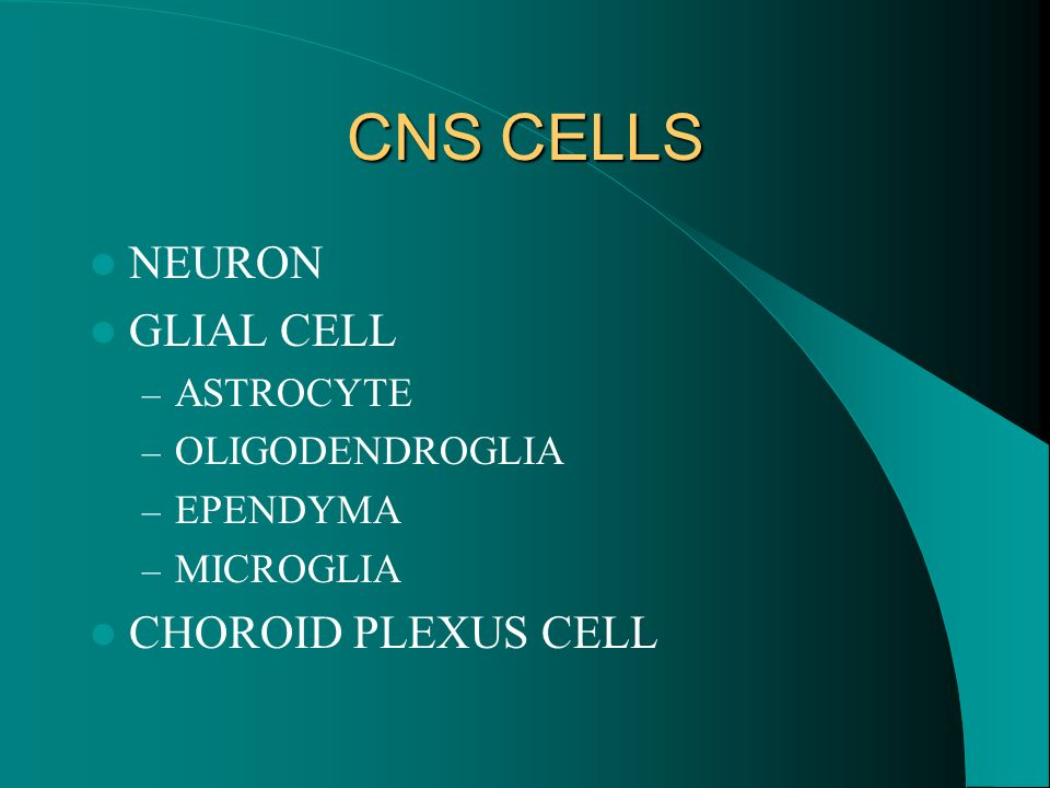 CNS CELLS NEURON GLIAL CELL CHOROID PLEXUS CELL ASTROCYTE