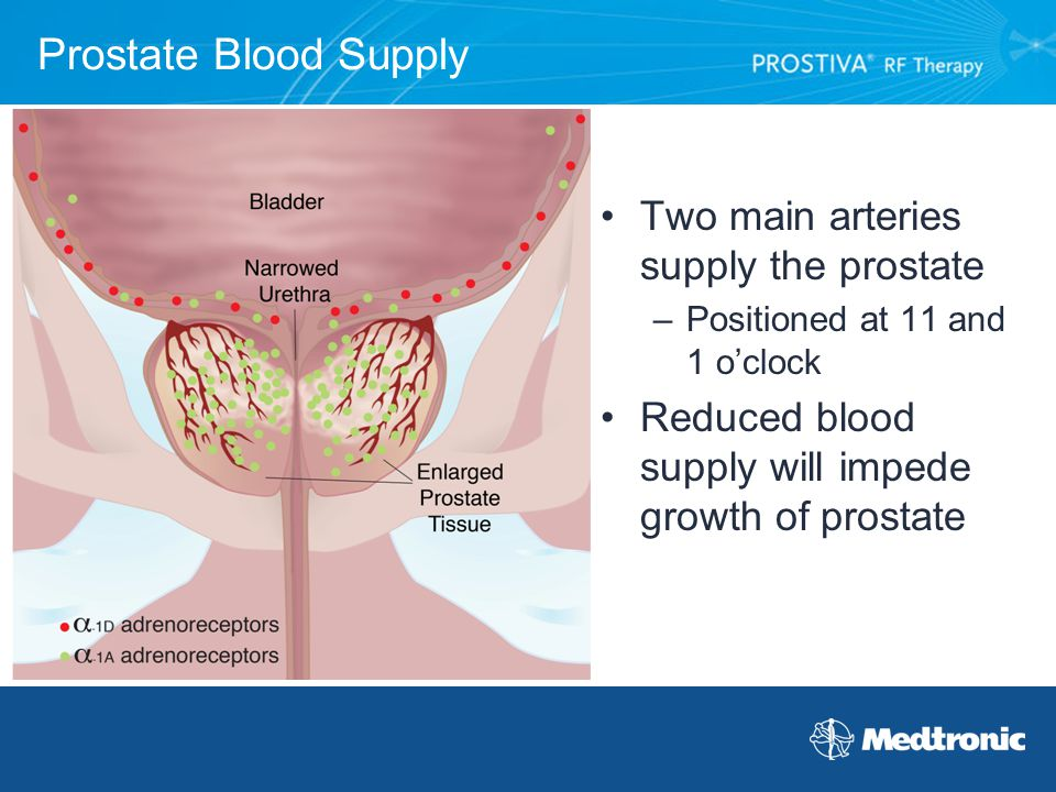 Prostate Blood Supply Two main arteries supply the prostate