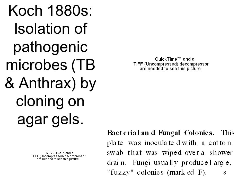 Koch 1880s: Isolation of pathogenic microbes (TB & Anthrax) by cloning on agar gels.