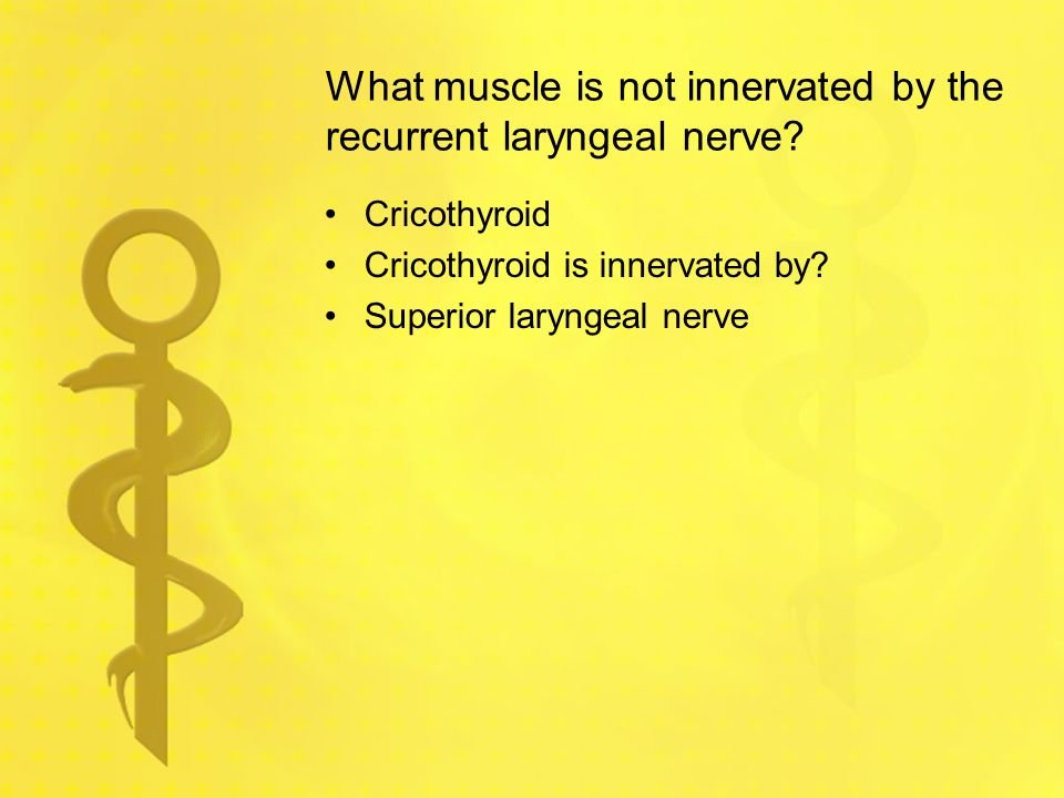 What muscle is not innervated by the recurrent laryngeal nerve
