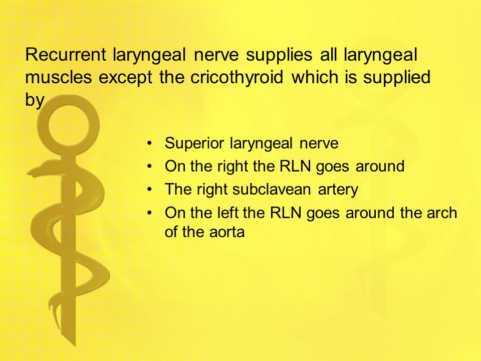 Recurrent laryngeal nerve supplies all laryngeal muscles except the cricothyroid which is supplied by