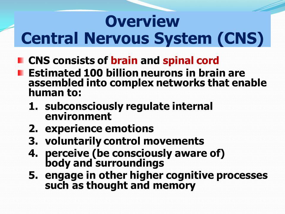 Overview Central Nervous System (CNS)