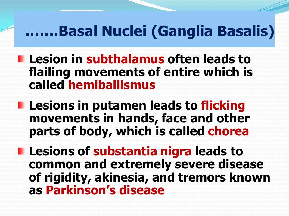 …….Basal Nuclei (Ganglia Basalis)