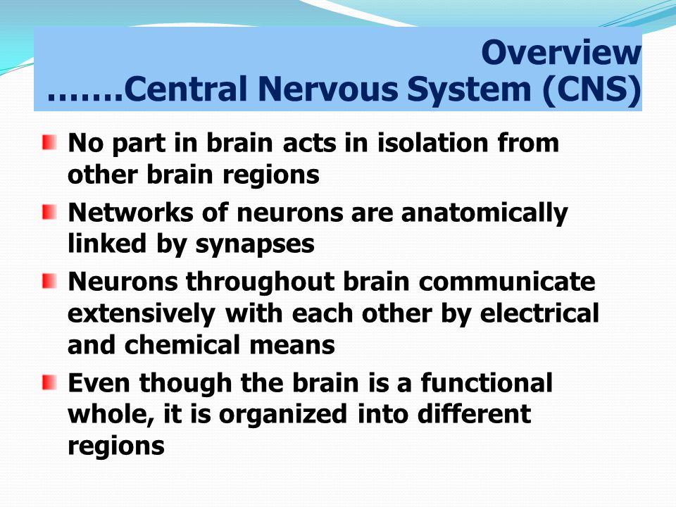 Overview …….Central Nervous System (CNS)