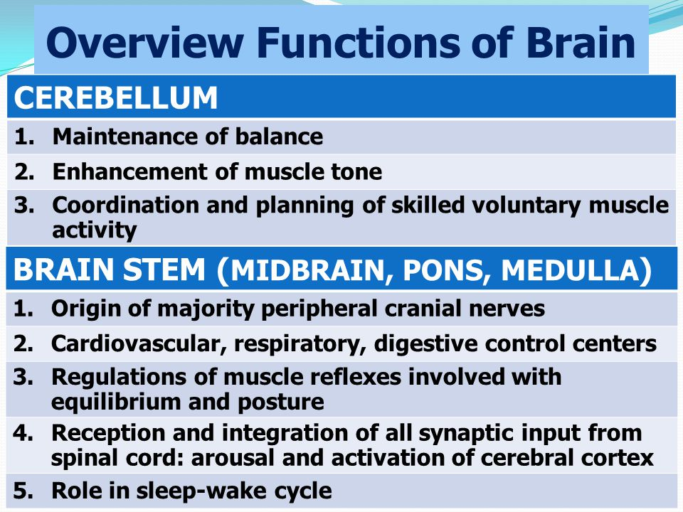 Overview Functions of Brain