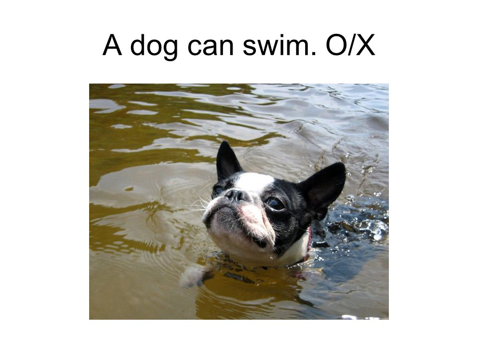 A dog can swim. O/X