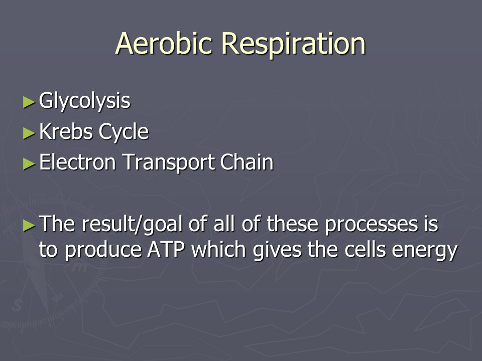Aerobic Respiration Glycolysis Krebs Cycle Electron Transport Chain