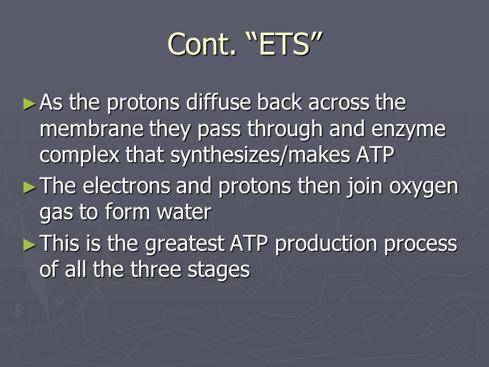 Cont. ETS As the protons diffuse back across the membrane they pass through and enzyme complex that synthesizes/makes ATP.