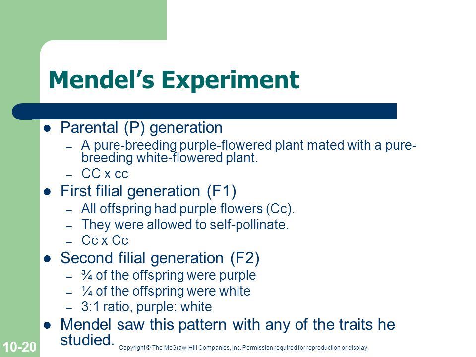 Mendel's Experiment Parental (P) generation
