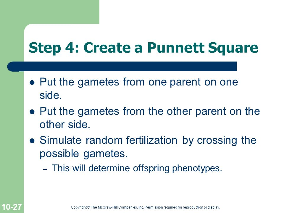 Step 4: Create a Punnett Square