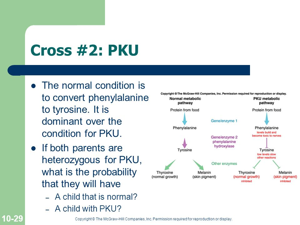 Cross #2: PKU The normal condition is to convert phenylalanine to tyrosine. It is dominant over the condition for PKU.