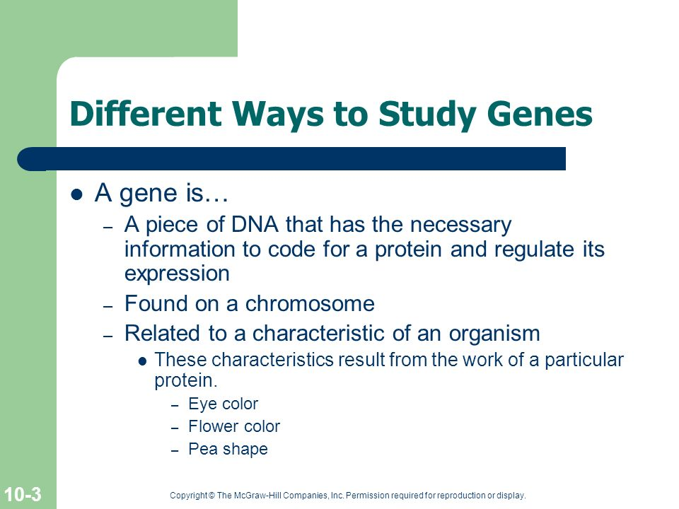 Different Ways to Study Genes