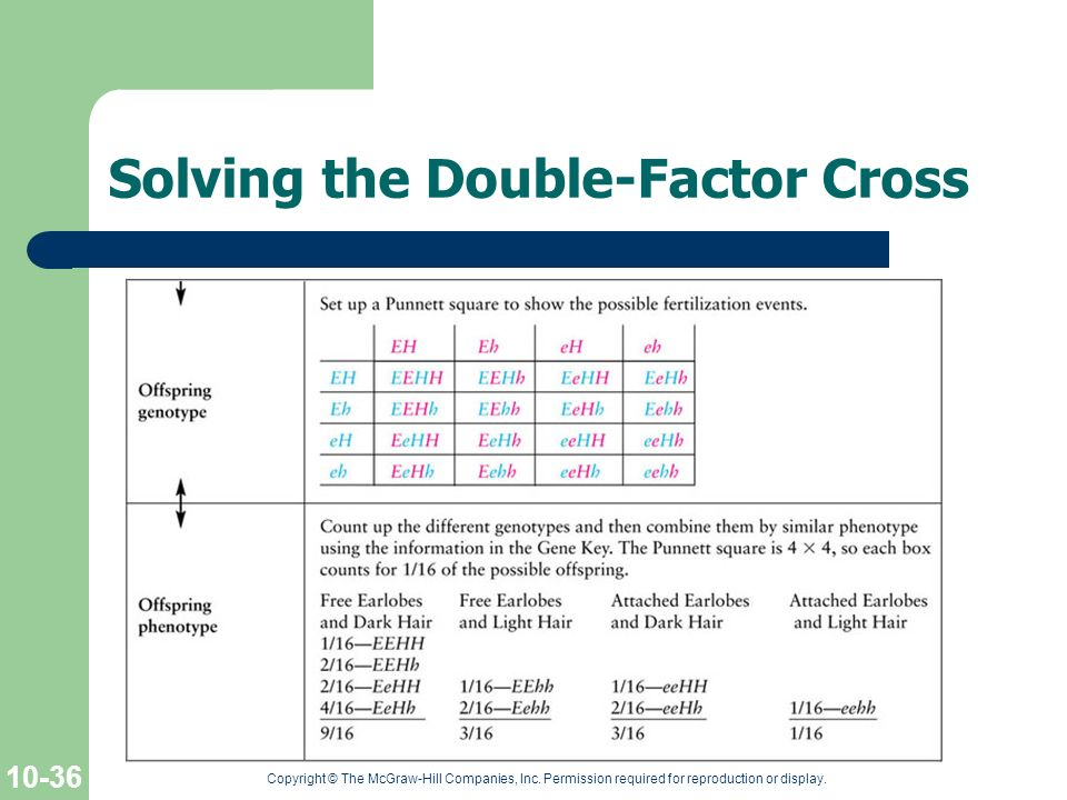 Solving the Double-Factor Cross