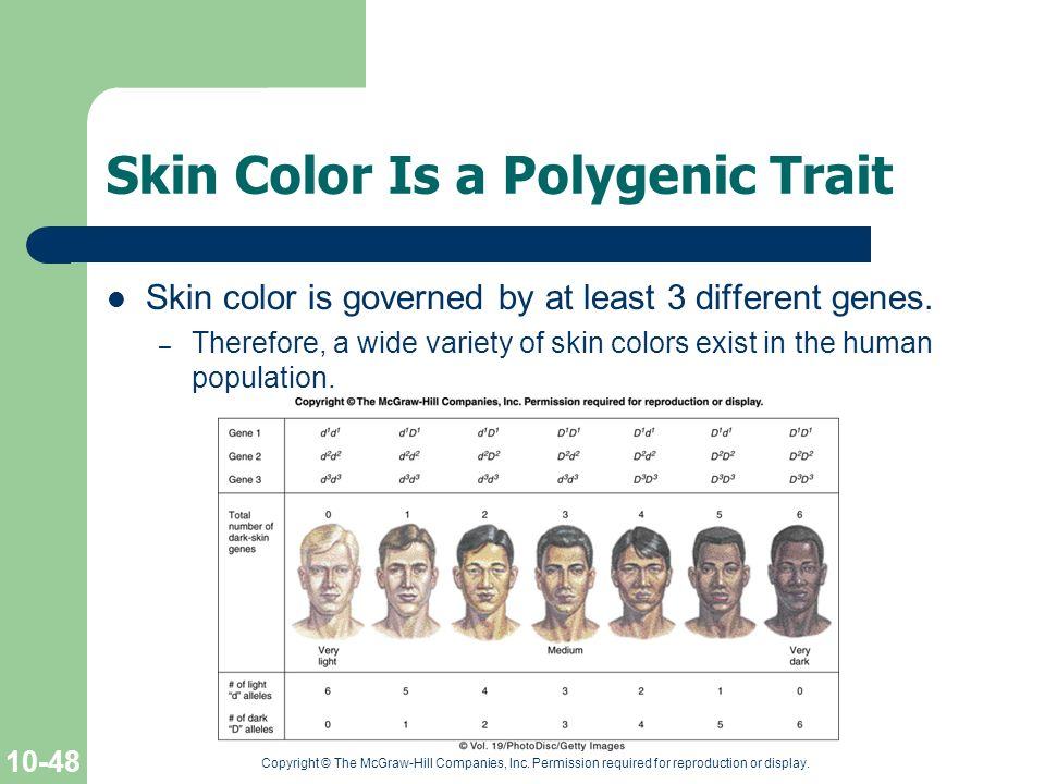 Skin Color Is a Polygenic Trait