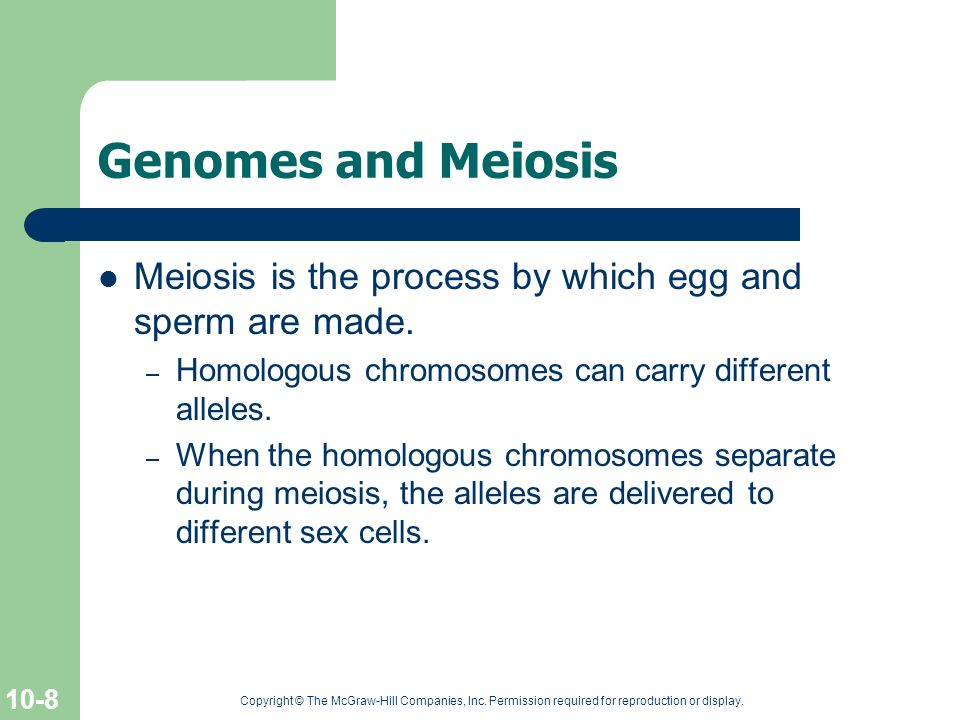 Genomes and Meiosis Meiosis is the process by which egg and sperm are made. Homologous chromosomes can carry different alleles.