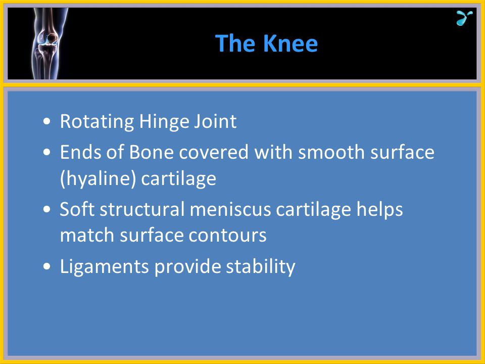 The Knee Rotating Hinge Joint