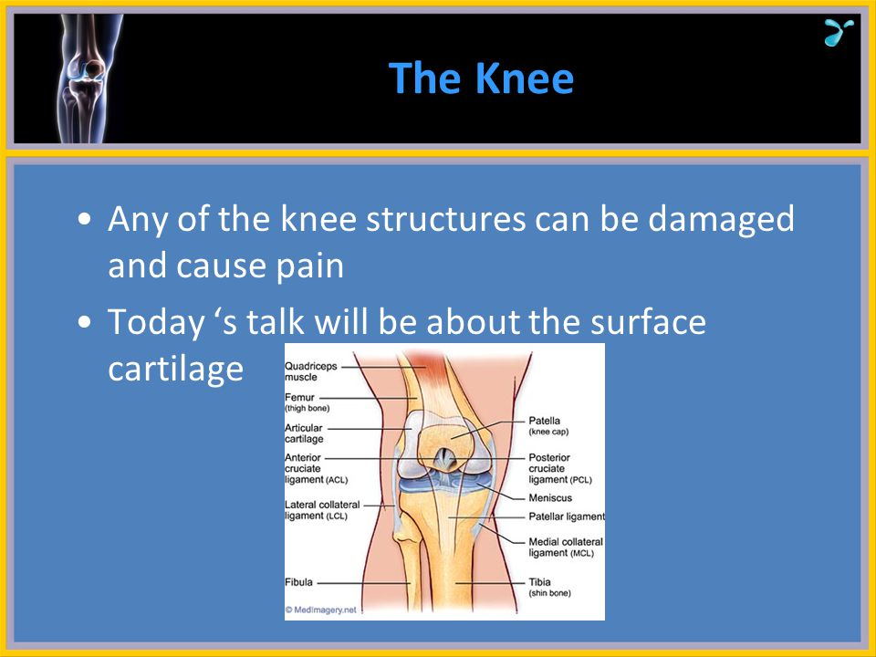 The Knee Any of the knee structures can be damaged and cause pain