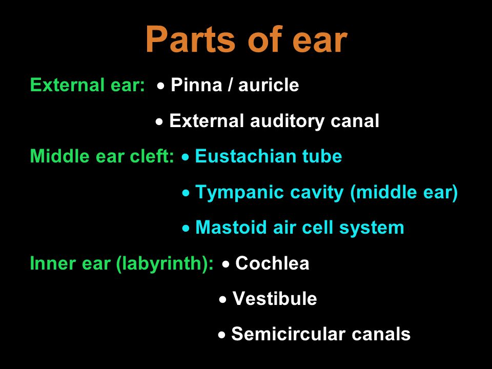Parts of ear External ear:  Pinna / auricle  External auditory canal